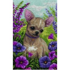 Borduurpakket Chihuahua