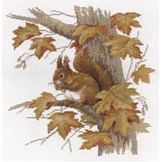 Borduurpakket Squirrel